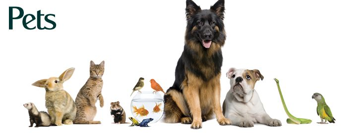 Online Pet Supplies in India.Free dogs for