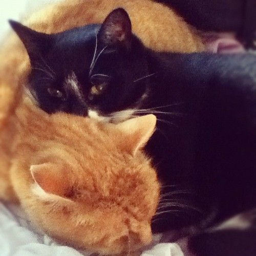 kitty cuddle