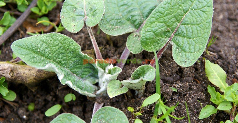 Plante medicinale de tratarea durerilor articulare