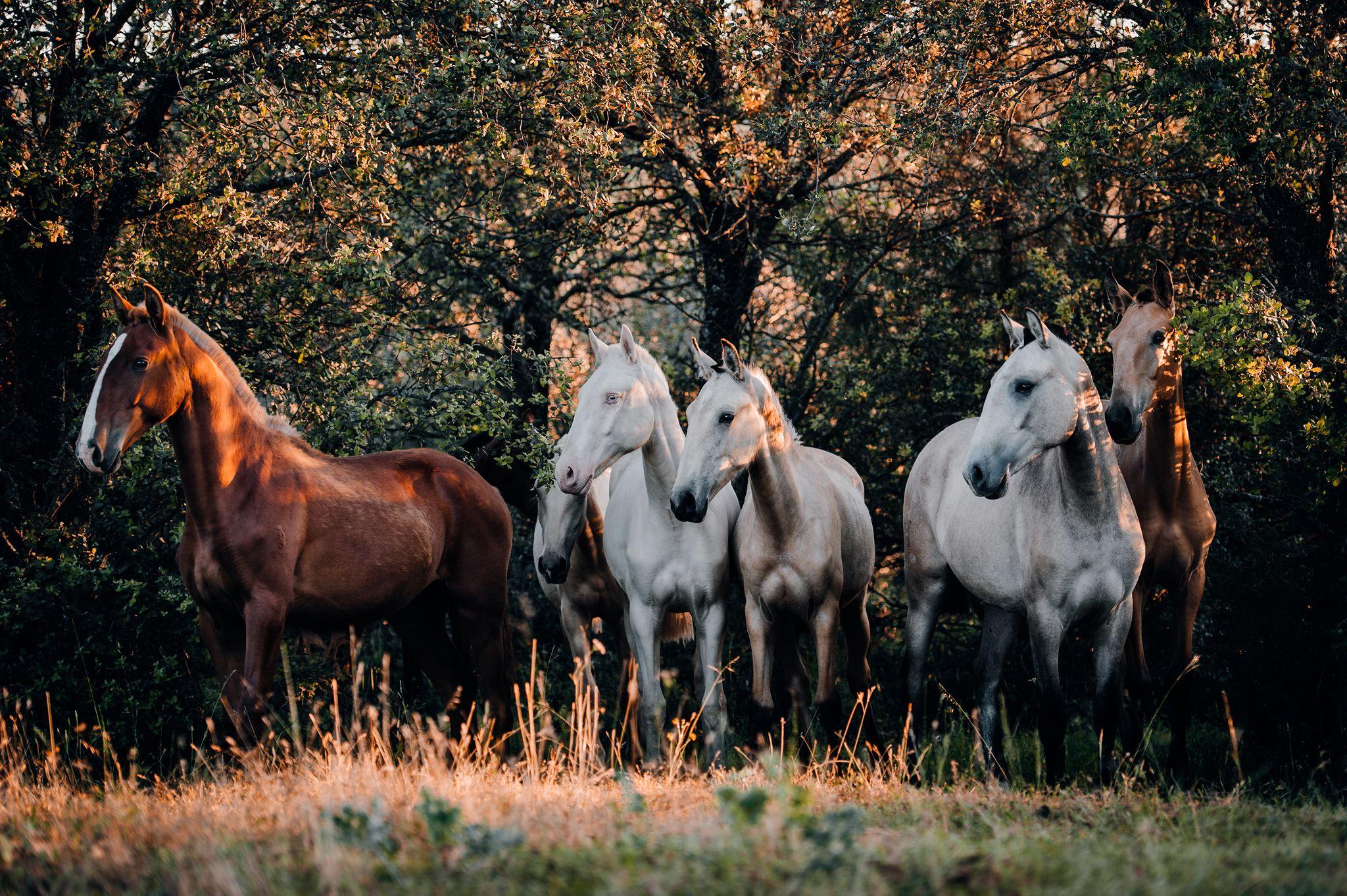 Fotos Pferde In Der Natur I Pferde Fotografie Pferde Pferdefotografie