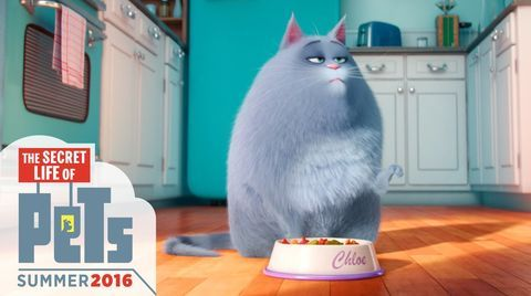 Chloe Is Me With Food The Secret Life Of Pets Movie Funsubstance Tv Secret Life Of Pets Pets Movie Secret Life