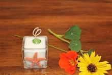 Natural Starfish Design, Coconut Soy Square Votive Candle, Cucumber Mint Scent