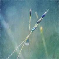 Stunning Photography For Sale On Fine Art Prints