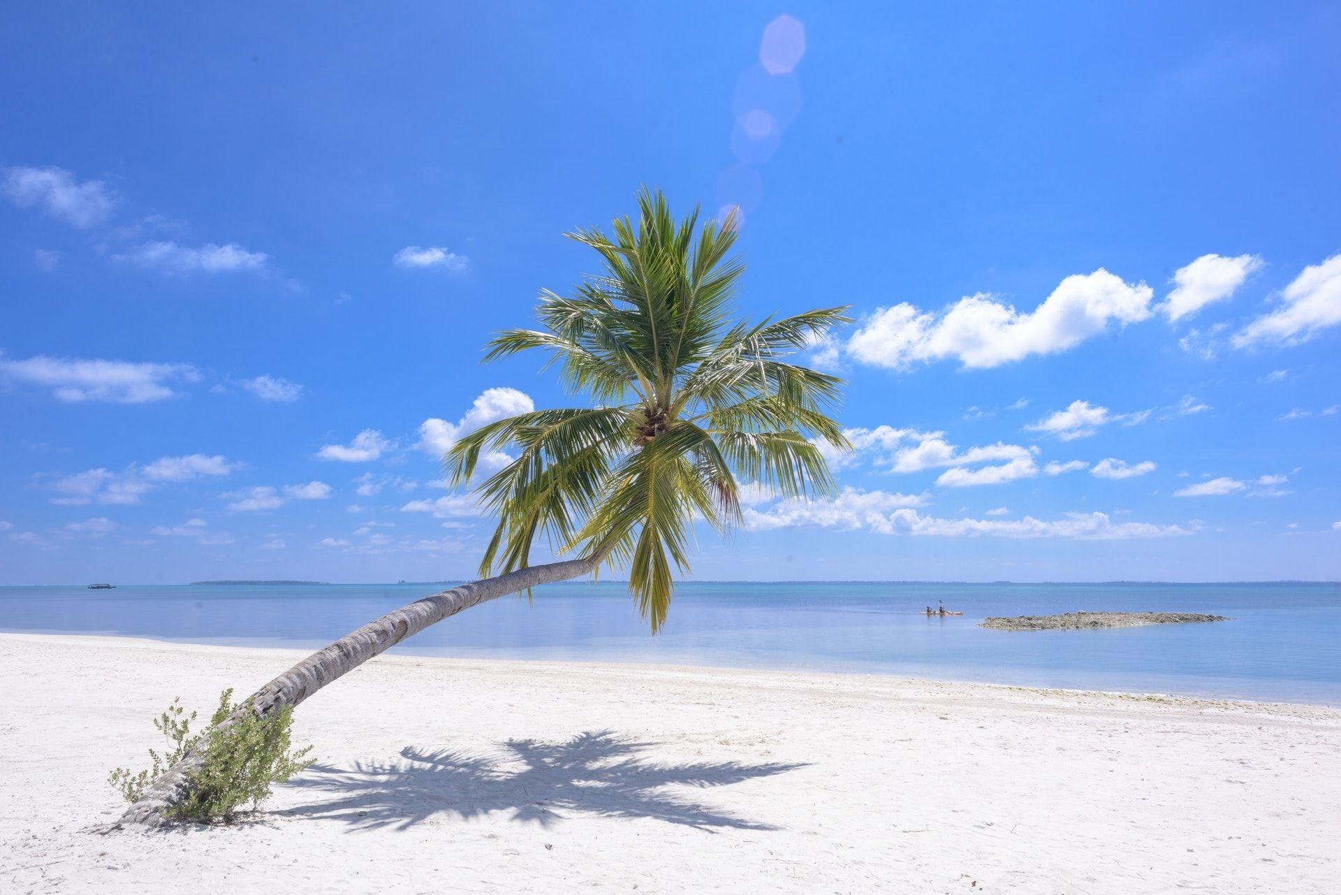 Pemandangan Pohon Kelapa Pantai Pantai Pemandangan