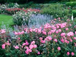 18ae55130be14fb8e2b150757f1f63bb - Pictures Of Rose Gardens With Companion Plants