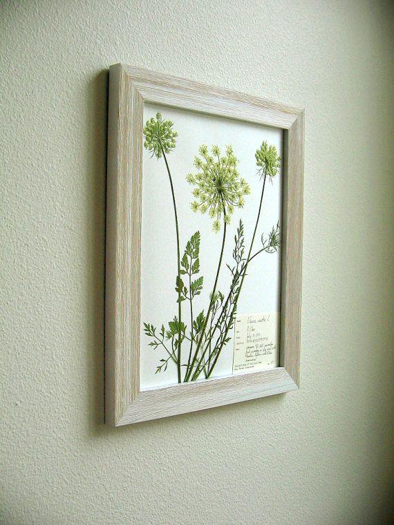 Real Pressed Botanical Art, Original Herbarium Specimen Art: Wild Carrot, Queen Anne's Lace, 11x14 Framed - LOOOVE