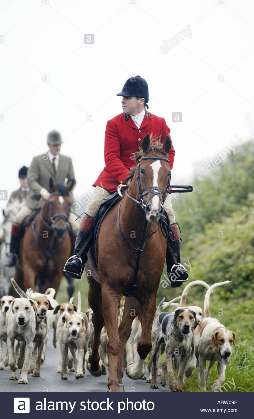 Download This Stock Image The Ledbury Hunt In Gloucestershire Uk Returns From A Morning S Fox Hunting Abw09f From Alamy S Library Of Fox Hunting Hunting Fox