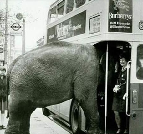 Elephant Tries To Board London Bus With Images Elephant Funny