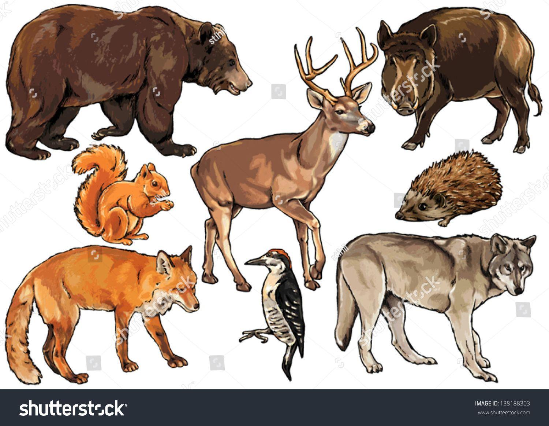 Related image Animals, Animals wild, Zoo animals