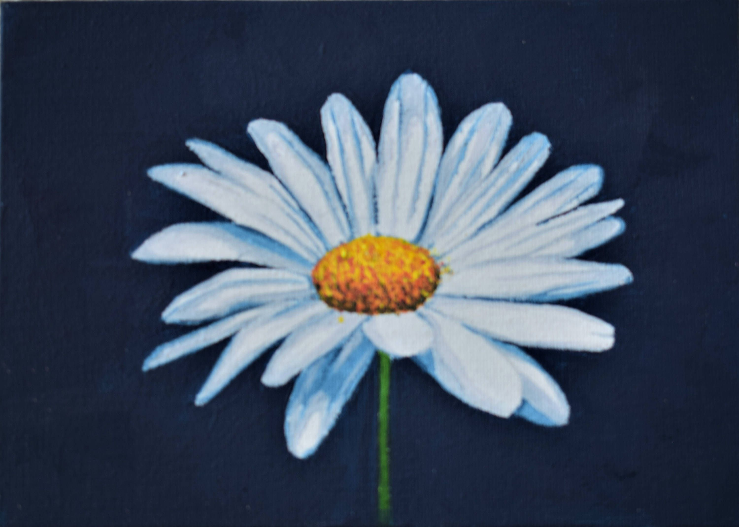 Daisy flower painting with dark blue background ... Easy Acrylic Flower Paintings On Canvas