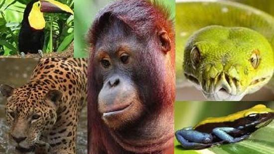 What are adaptations of tropical rainforest animals – the q&a wiki ...