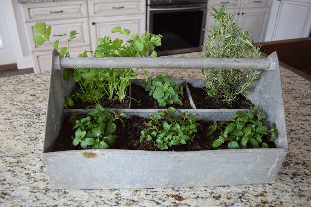 Farm To Fete Easy Countertop Herb Garden Herb Garden Herbs Garden