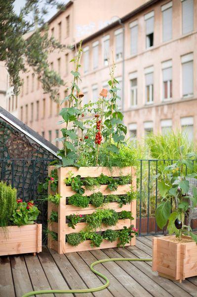"""Come coltivare l\'orto sul balcone: gli ortaggi più """"facili"""" [[MORE ..."""