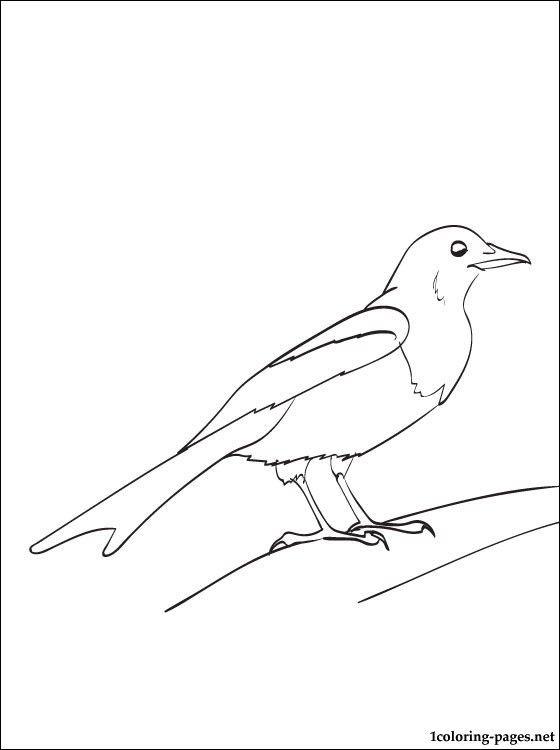 Magpie Coloring And Printable Page | Coloring Pages
