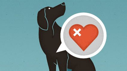 Early mosquitoes due to a mild winter spell heartworm danger for pets http://dcmosquitosquad.com