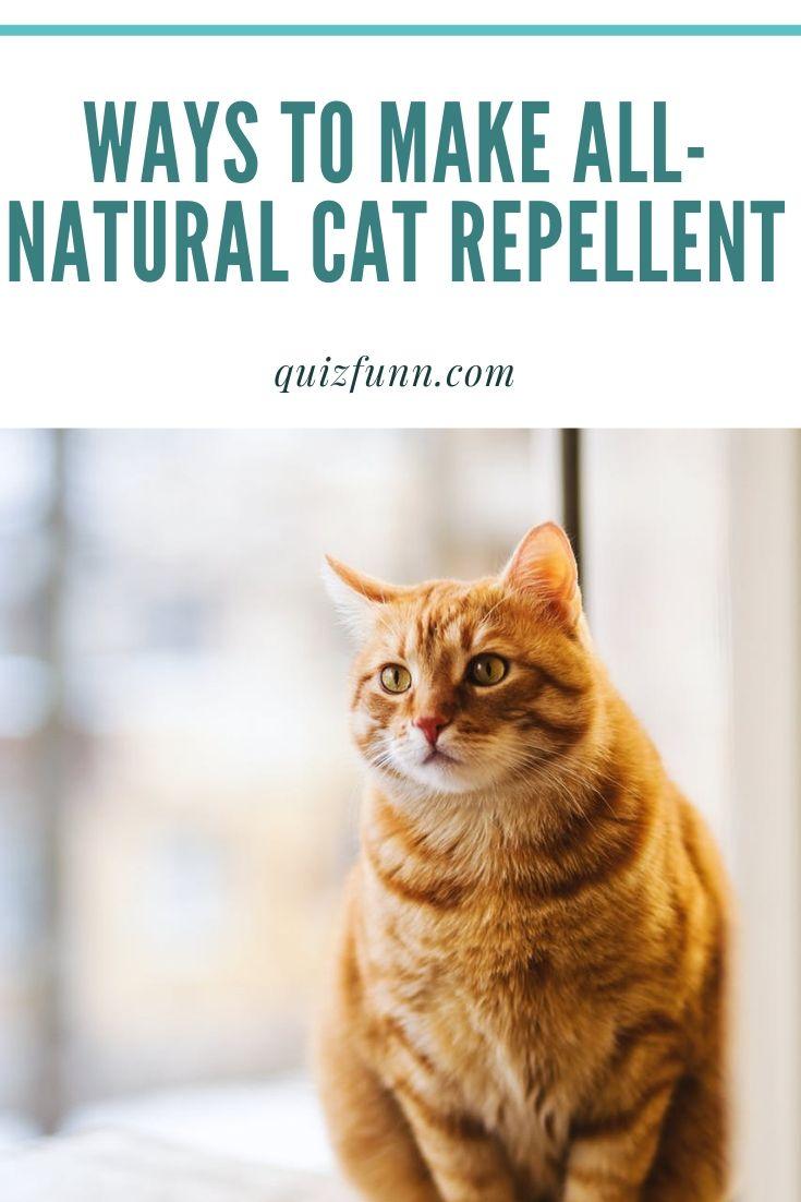 Ways to Make AllNatural Cat Repellent Cat repellant