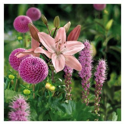 Cottage Garden Collection - 9 pack