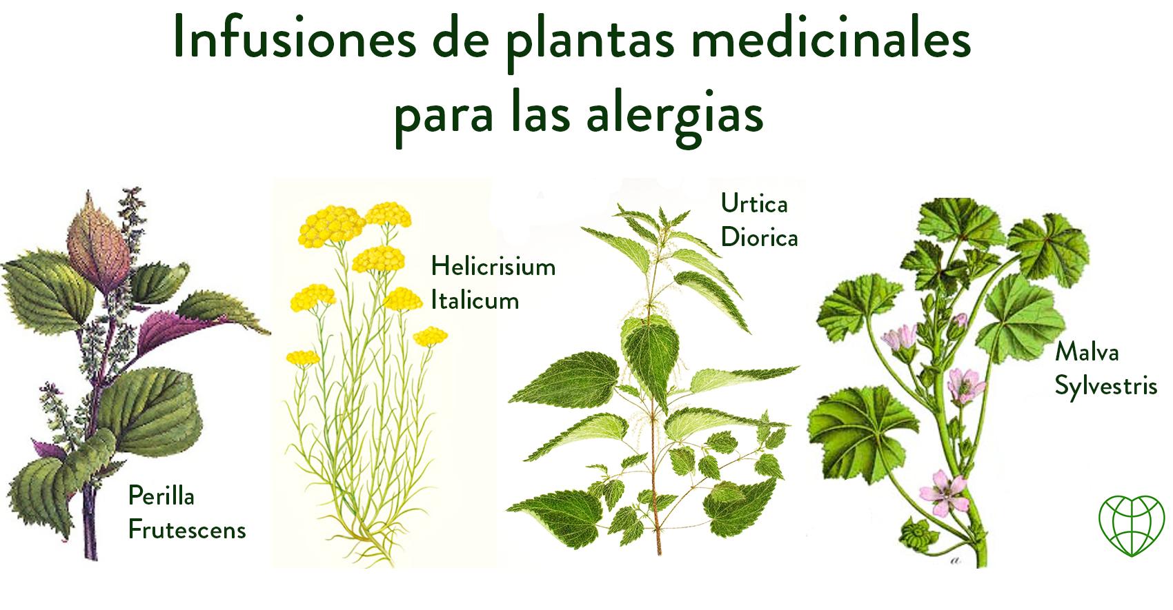 Planta Medicinales Para Las Alergias Herbs Plants Bio