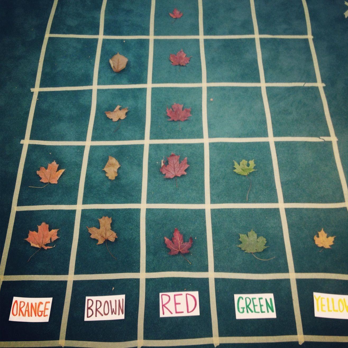 Leaf Graph After Our Leaf Hunt Kindergarten Fall Graphing