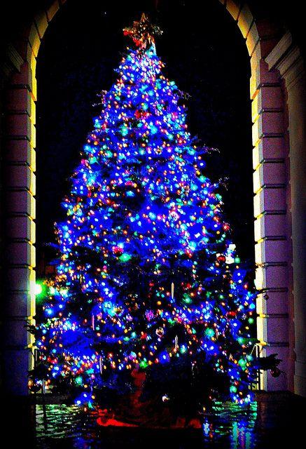 css pasadena christmas tree california