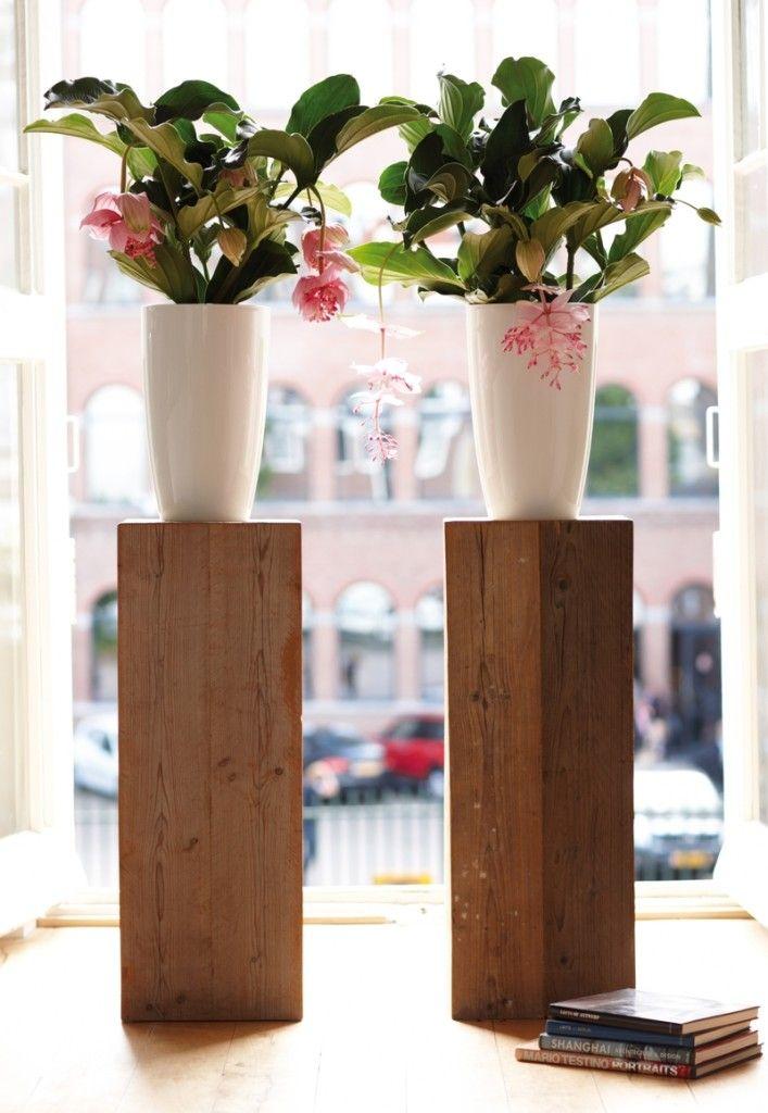 Zwei Blumentpfe sind besser als einer  Pflanzen zu