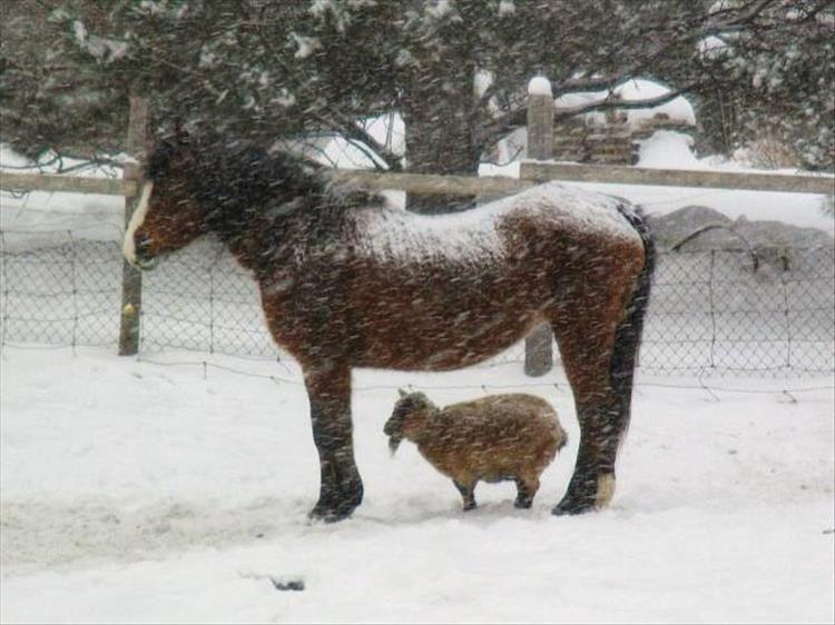 Tempète de neige !