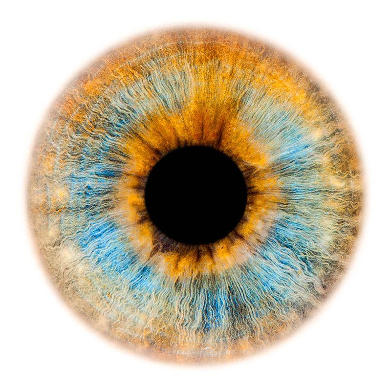 Window to the Soul #90 | Contacts | Pinterest | Ojos, Iris y Locura