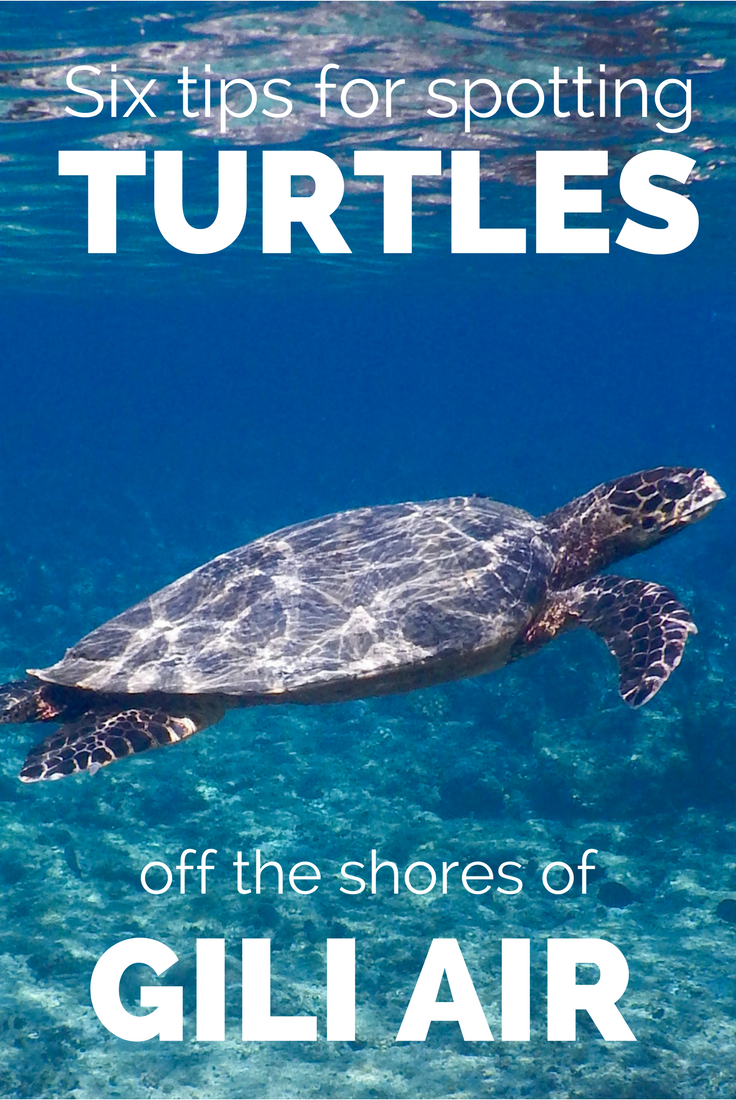 Swimming with turtles off the shores of Gili Air was incredible. We found there was a higher chance in us spotting turtles in certain areas, so we've written a short post about it :) #acrosslandsea