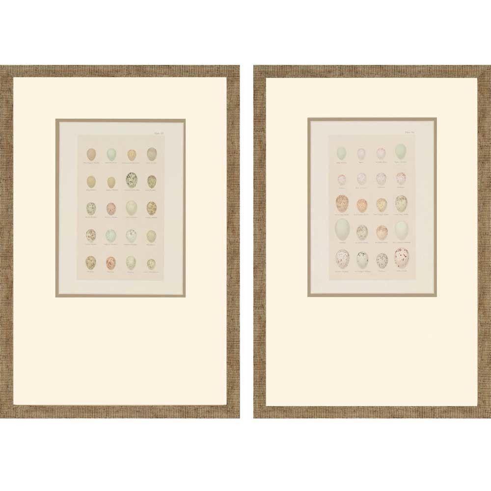 Egg Study Framed Print