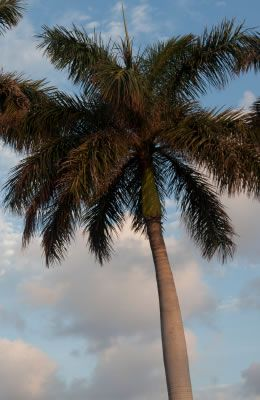 The Palm Beach Gardens area is the perfect vacation getaway! http://www.waterfront-properties.com/pbgballenisles.php