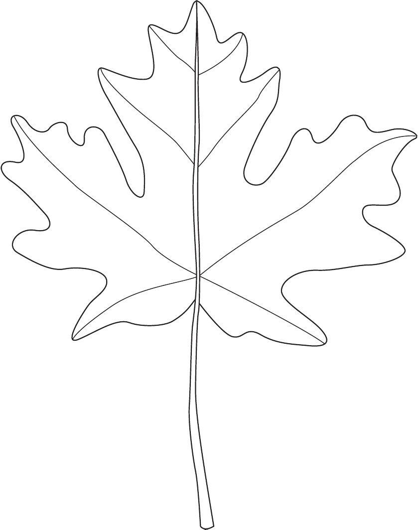 Leaf for leaf patterns #leaftemplate