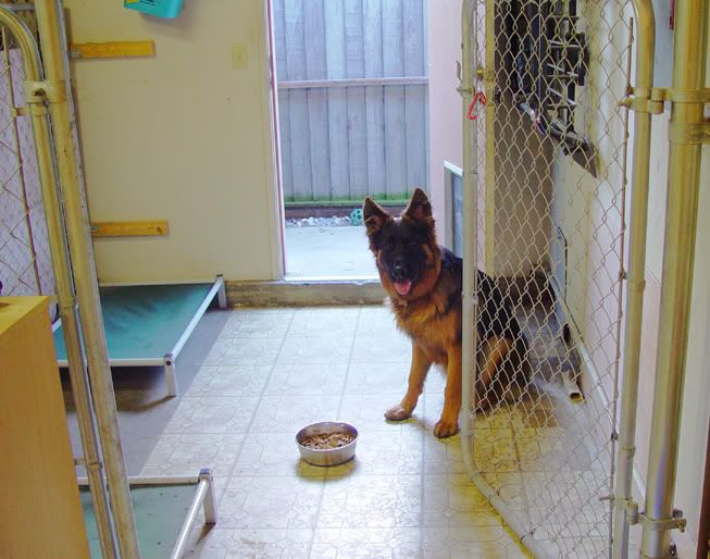 Indoor dog kennel / run - German Shepherd Dog Forums Would want a ...