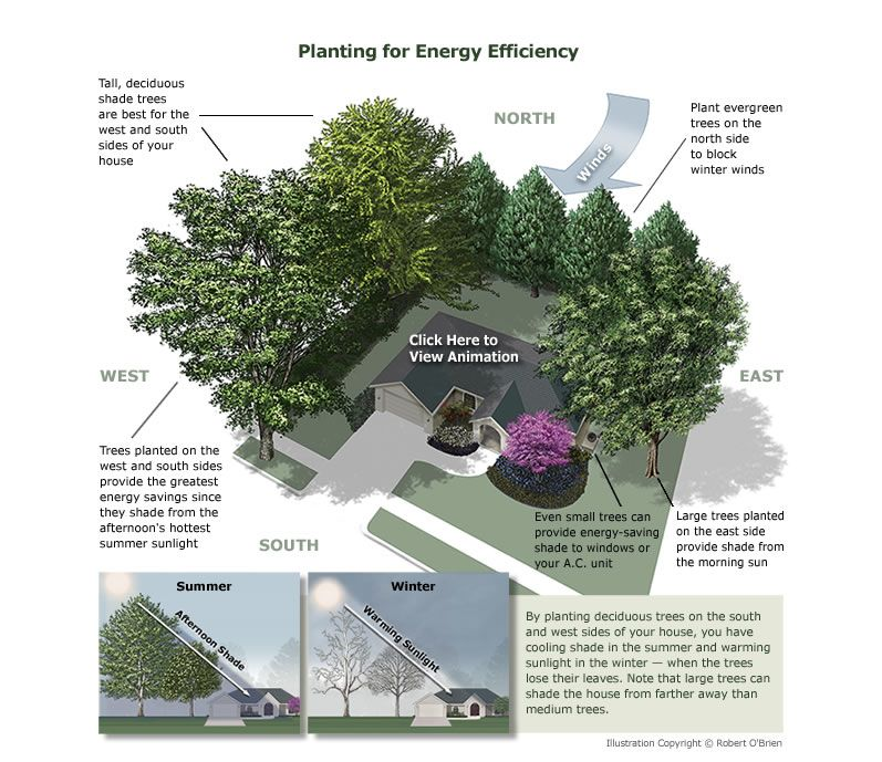 Planting For Energy Efficiency Backyard Garden Trees To Plant