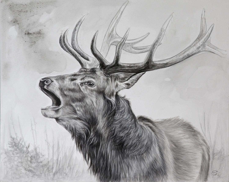 portrait von einem r hrenden hirsch portrait of a belling stag wildmotive wild animals. Black Bedroom Furniture Sets. Home Design Ideas