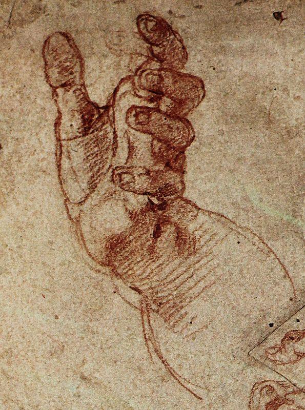 anatomy by Michelangelo - haman study | Miguel angel, Anatomía y Ángeles