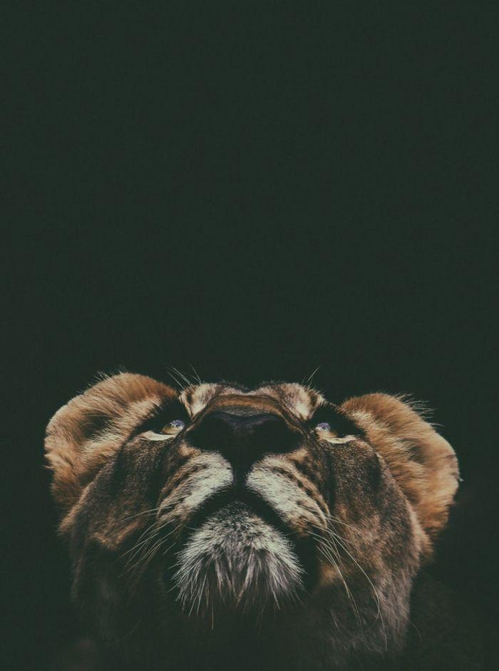 Mignonne Photo Animal Sauvage Lion Fond D Ecran Nature Fond D Ecran Gratuit Pour Ordinateur Idee Orig En 2020 Fond D Ecran Style Photographie De Lion Fond D Ecran Lion