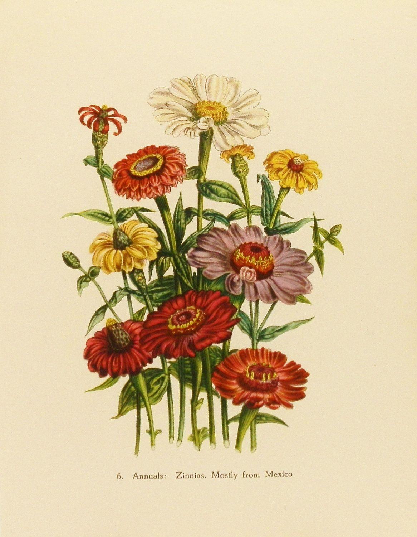 Vintage Floral Print Zinnias Flower Print Vintage Wall Decor Victorian Botanical
