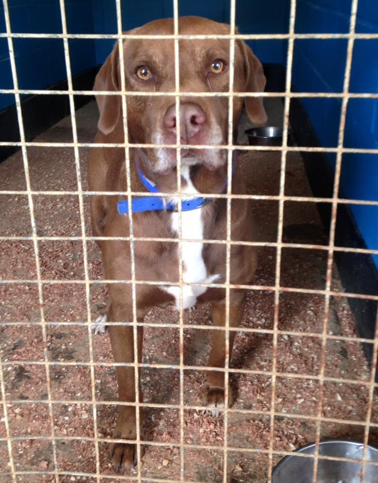Burt was found chipped with an older contact number that