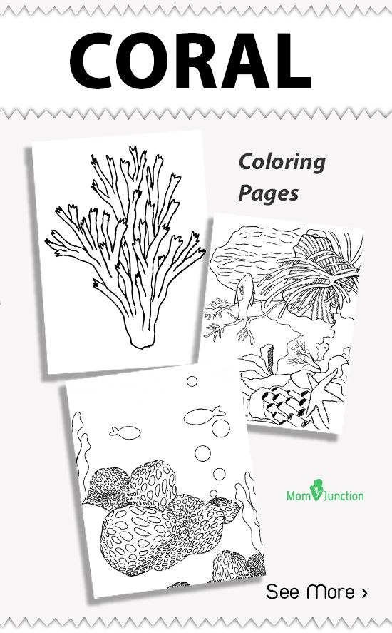 Image Result For Coral Coloring Pages Adults