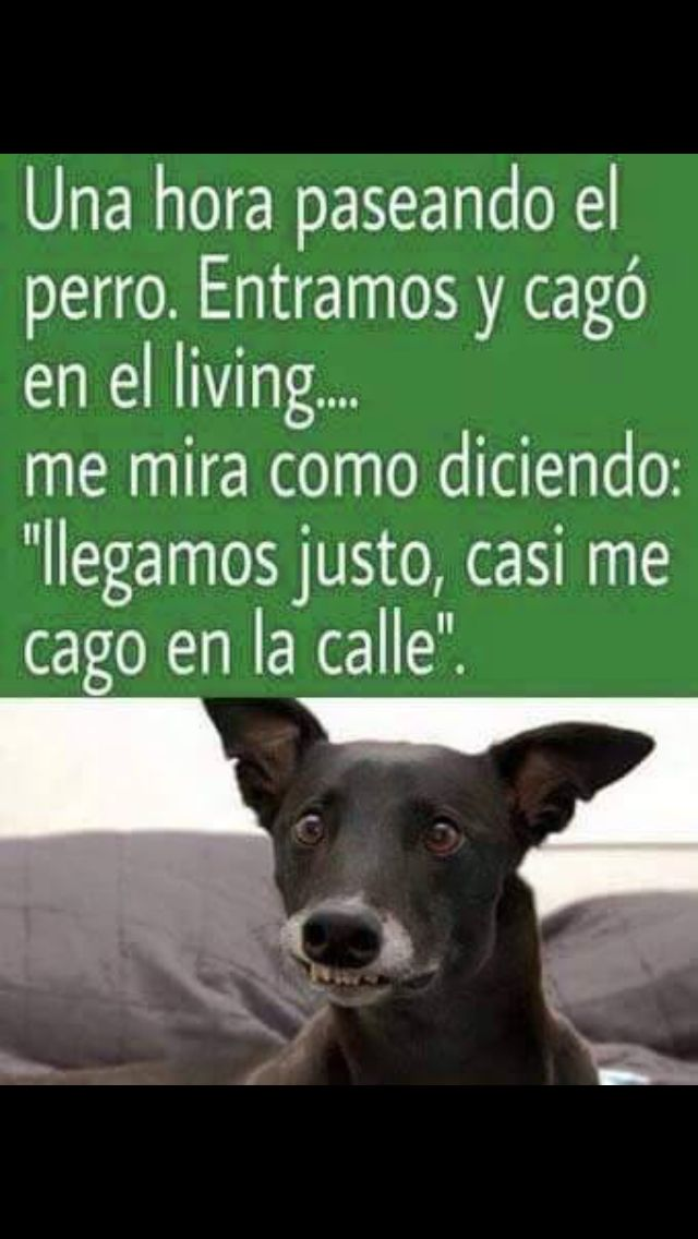 Perros!! | Funny dogs, Pets, Animals