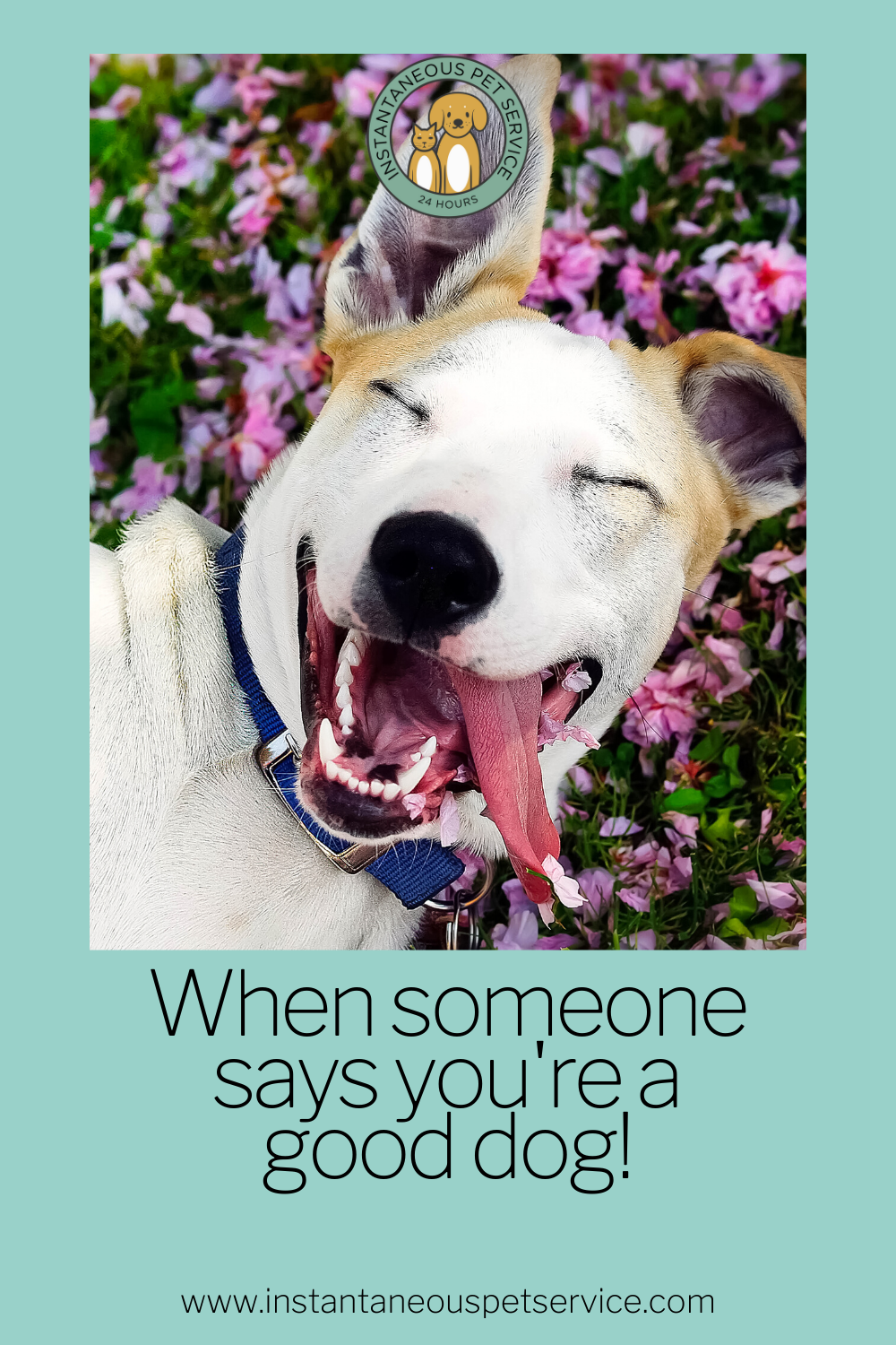 #petquotes #animallover #doglover