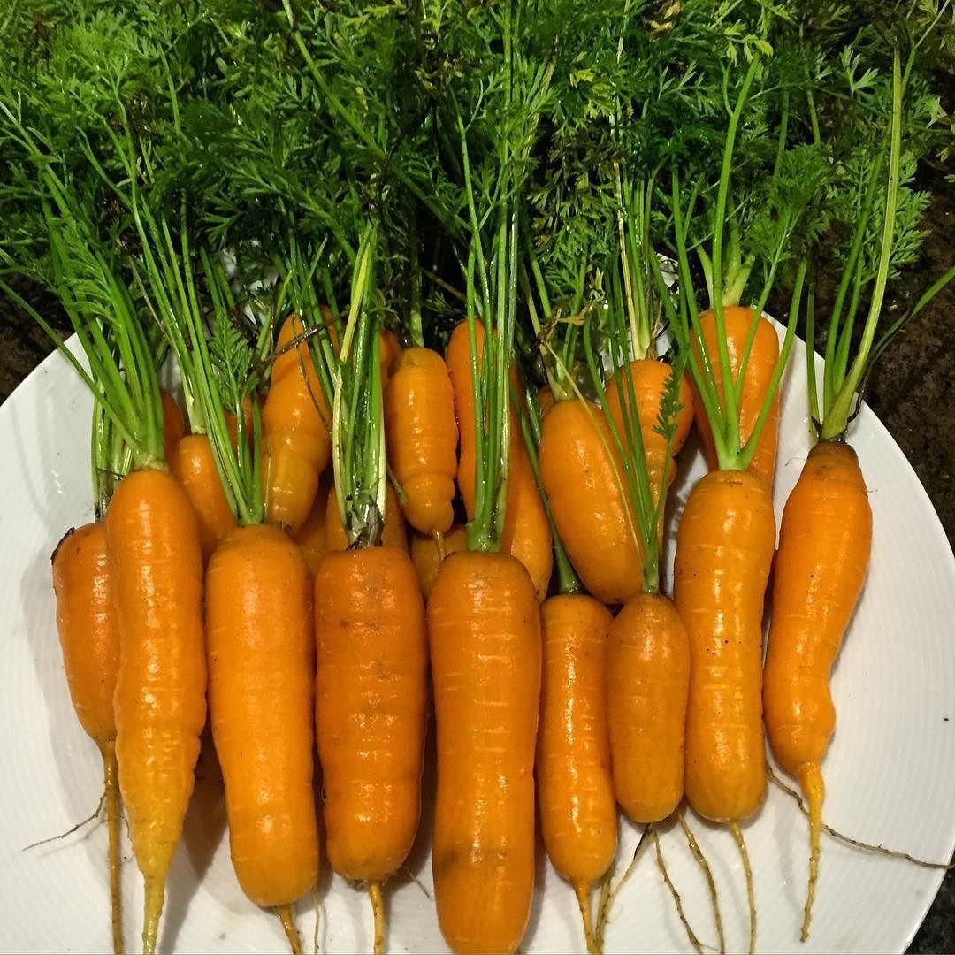 Not bad for a November harvest! #gardening #homegrown #vegetables #westcoastliving