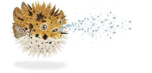 Safari Incredible Creatures Pufferfish Figure by Safari Ltd.. Save 23 Off!. $8.41. Each figure includes an descriptive hangtag in 5 languages. We take pride in the quality, innovation and design that have characterized our products for over 3 generations. All our products are phthalate-free and thoroughly safety tested to safeguard your child's health. From the Manufacturer Play is the essential joy of childhood. Through play children learn about themselves, their...