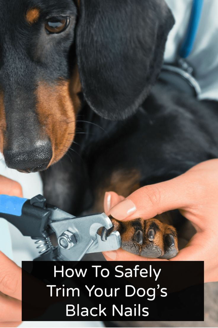 How To Safely Trim Your Dog's Black Nails Dog nails