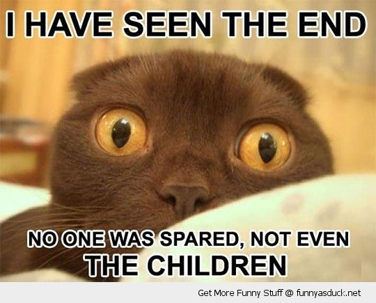 I Have Seen The End Funny Photo Captions Funny Cat Pictures Funny Captions