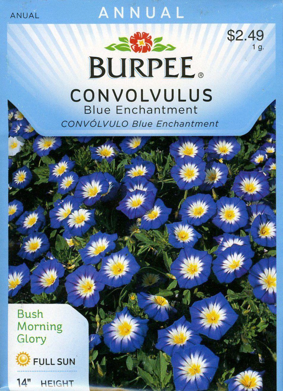 Burpee 48389 Convolvulus Blue Enchantment Seed Packet: Amazon co uk