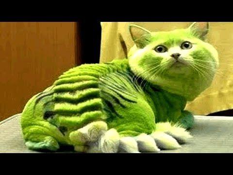 10 Razze Di Gatti Più Costose E Esotiche Del Mondo Youtube Gatti