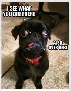 Shay dog - Bing images