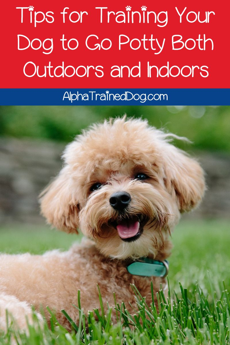Can A Dog Be Trained To Go Potty Both Outdoors And Indoors In