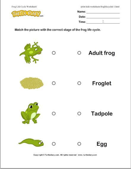 Life Cycle Of A Frog With Images Special Education Science